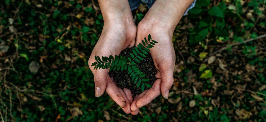 Expertos en medio ambiente apuestan por la economía circular