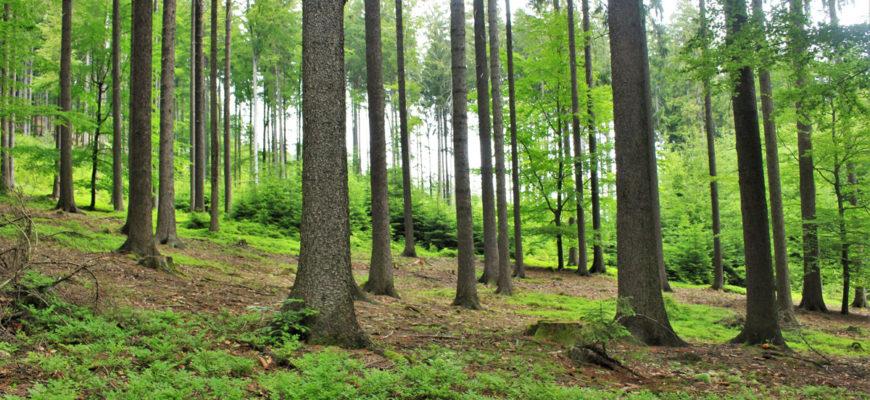 20 razones para plantar un árbol